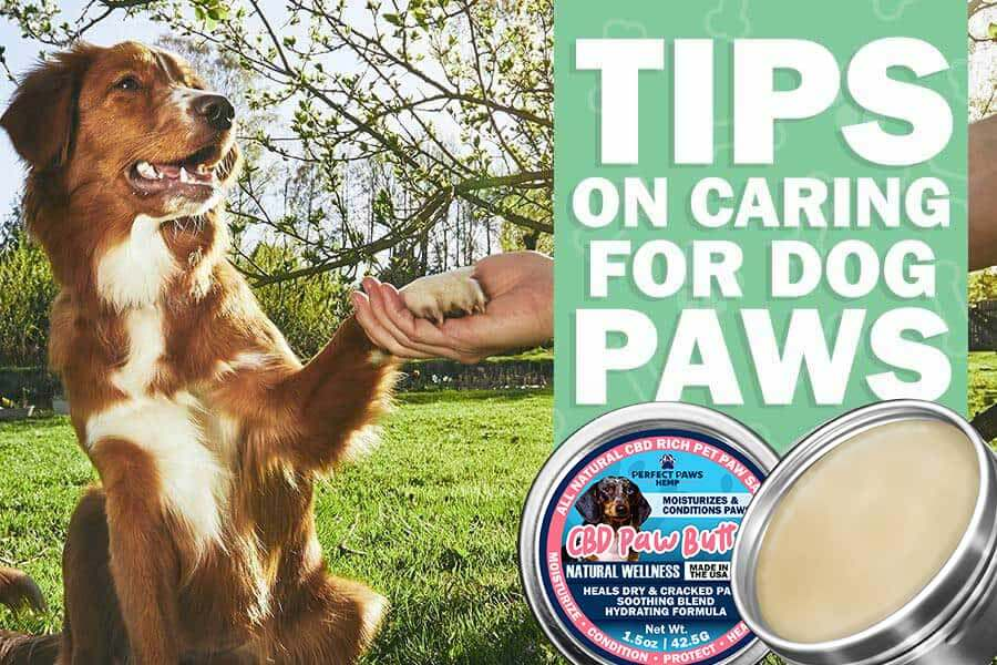 Caring for Dog Paws