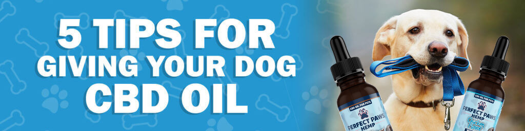5 Tips for Giving Your Dog CBD Oil