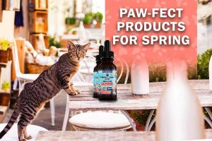 CBD Products for Dogs and Cats