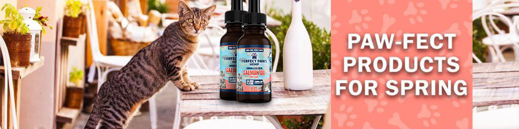 CBD Products for Cats and Dogs