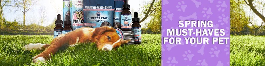 Must Have CBD Pet Products