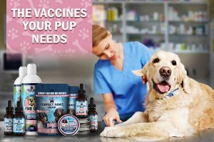 Dog Shots & Puppy Vaccines
