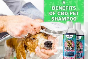 CBD Pet Shampoo and Conditioner Benefits