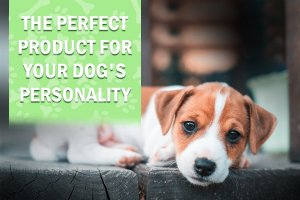 CBD Products for Your Dog's Personality