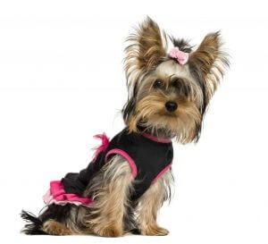 Pampered Pooch Dog Personality