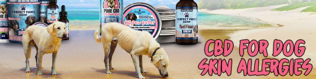 CBD for Dog Skin Allergies