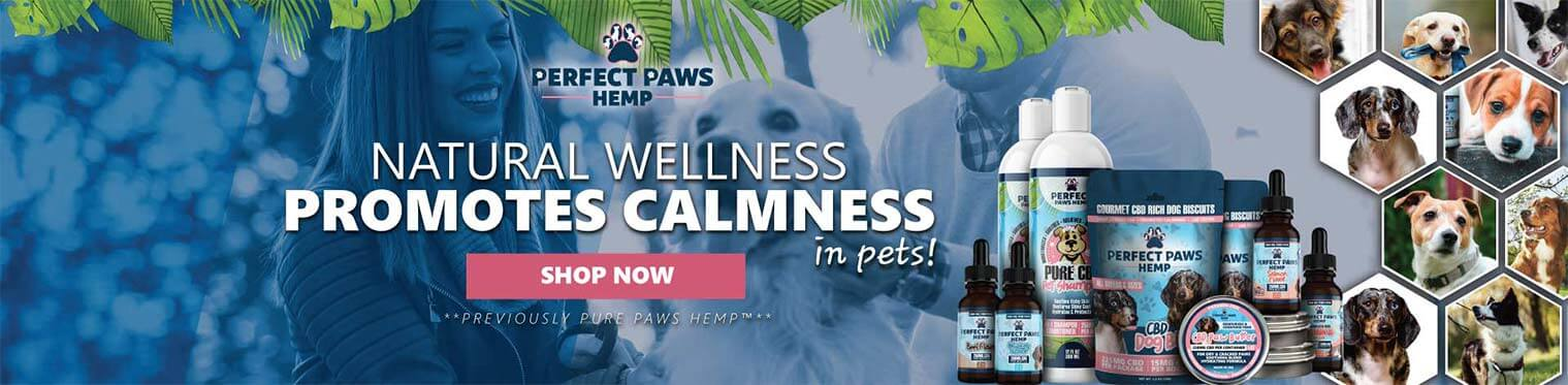 Premium CBD Products for Pets