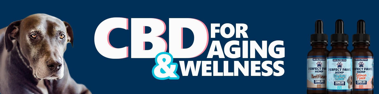 CBD for Aging Dogs Wellness
