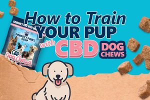 how to train your pup with cbd dog chews preview image